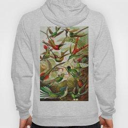 Vintage Hummingbird Illustration Hoody