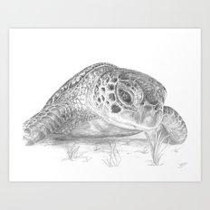 A Green Sea Turtle :: Grayscale Art Print