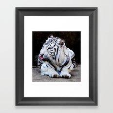 Tiger Tongue Framed Art Print