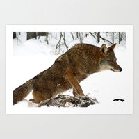 coyote Art Prints featuring Coyote by tracy-Me