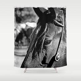 Horse-1-B&W Shower Curtain