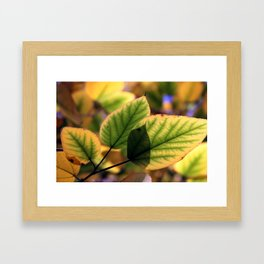 Dreamy Leaves Framed Art Print