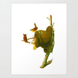 House Wren Bird Art Print