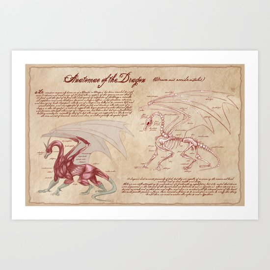 Anatomy of the Dragon Art Print