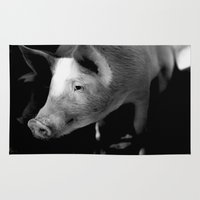 pigs Area & Throw Rugs featuring Pigs by Michael Bou-Nacklie