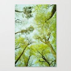 spring treetops  Canvas Print