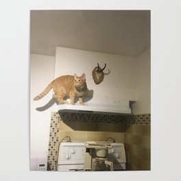 Scaredy Cat Poster