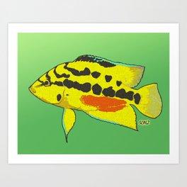 Tricolor Salvini Cichlid Art Print