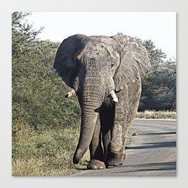 CArt Elephant 118 Canvas Print