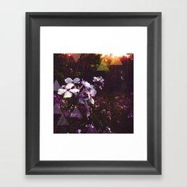 Wilted Framed Art Print