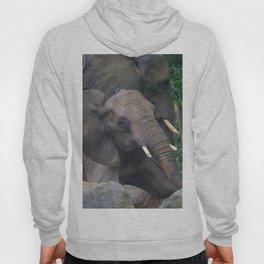 Elephants Eye Hoody