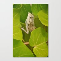 lizard Canvas Prints featuring Lizard by Bonjourik