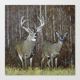 White Tail Couple oil Painting Print Canvas Print