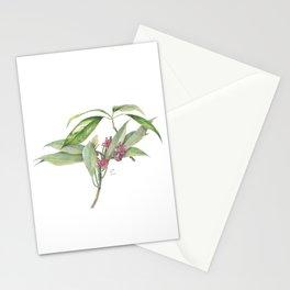 Star Anise Botanical Illustration Stationery Cards