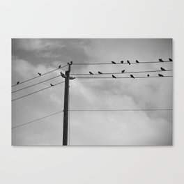 photography gothic birds animals black-white digital creepy by Robert Gregory Griffeth Canvas Print