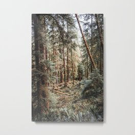 Forest in the PNW | Oregon Landscape and Nature Metal Print