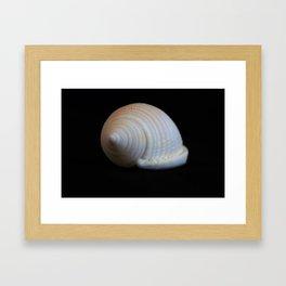 Sea Shell on Black V Framed Art Print