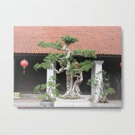 Old Bonsai Pine Tree, Hanoi, Vietnam Metal Print