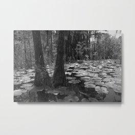 Pads, Okefenokee National Wildlife Refuge Metal Print
