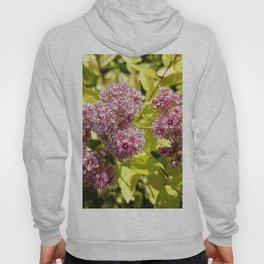 Lilac flowers Hoody