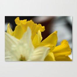 Vibrant Daffodils Canvas Print