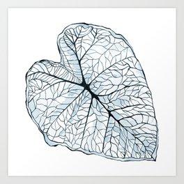 Blue Alocasia Botanical Art Print
