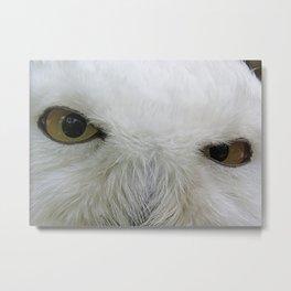 Keen look of the snow owl Metal Print