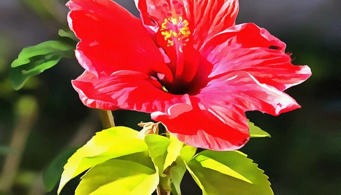 Beautiful Red Tropical Hibiscus Flower Pillow Sham