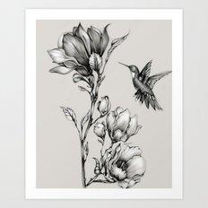 Magnolia Flower and Hummingbird Art Print