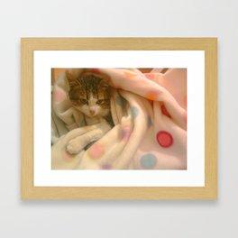 Kitty photo Framed Art Print