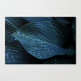 Hosta Leaves with Water Droplets Canvas Print