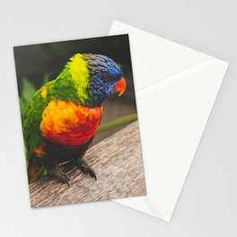 Lorikeet 03 Stationery Cards