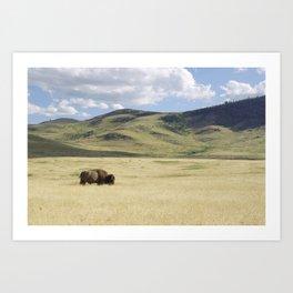 Alone Time - Bison on Range Art Print