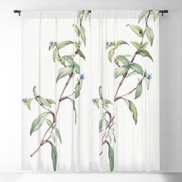 Birdbill dayflower  from Les liliacees (1805) by Pierre Joseph Redoute (1759-1840) Blackout Curtain