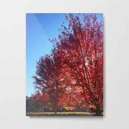 Red Leaves on Campus One Metal Print