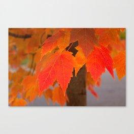 Crimson Fall Canvas Print