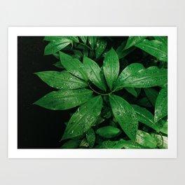 Spiral Ginger Plant Art Print