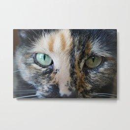 Cat Eyes: Tortoiseshell cat named Iris (2) Metal Print