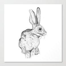 Bushman Hare Canvas Print
