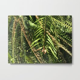 Funky Little Fern Metal Print