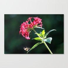 Light Honey Wings Canvas Print