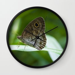 Ypthima SP Butterfly Borneo Wall Clock