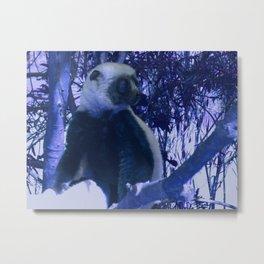 Sifaka in Blue Metal Print
