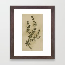 Thyme Framed Art Print