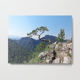 Tree in the mountain peack with green view in the sunny noon with clear blue sky Metal Print