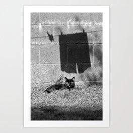 Cat and shadows Art Print