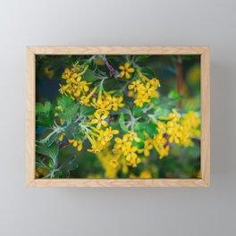 Yellow Blossoms 4 Framed Mini Art Print