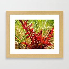 Fire Red Framed Art Print