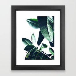 Ficus Elastica #26 #foliage #decor #art #society6 Framed Art Print