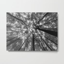 Smoky Mountain Summer Forest X - National Park Nature Photography Metal Print